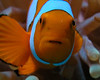 Diving on the Great Barrier Reef : We saw 'Nemo'
