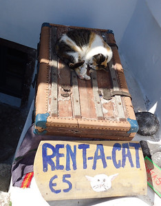 In Oia you can rent this cat for 5 euro.  Ha!